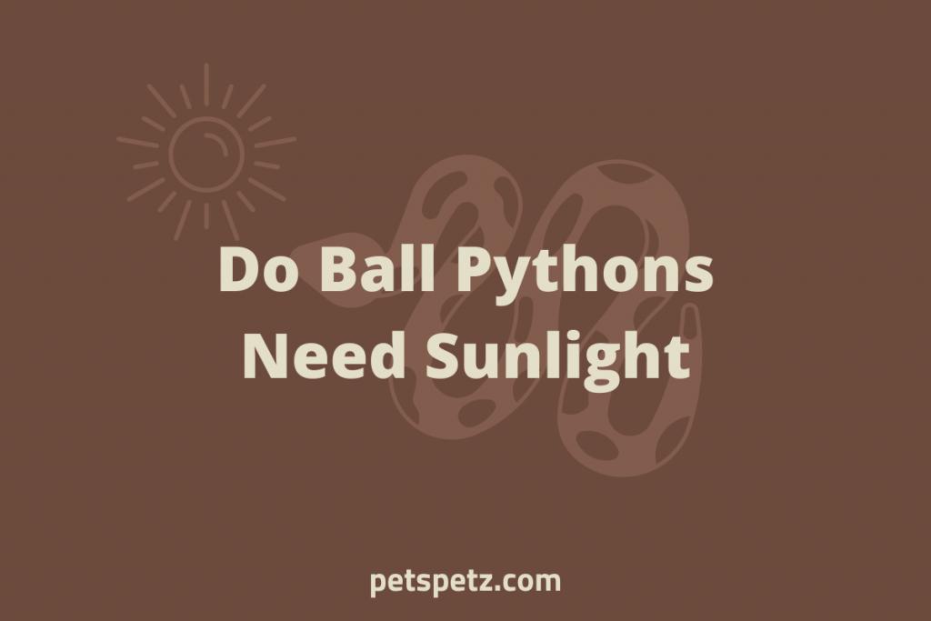 Do Ball Pythons Need Sunlight