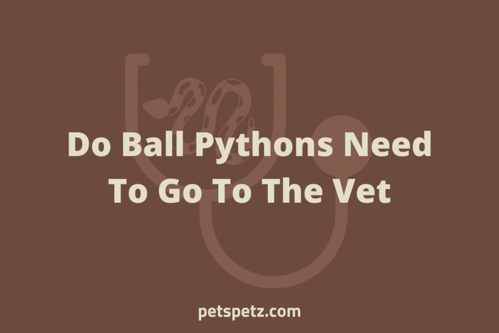Do Ball Pythons Need To Go To The Vet