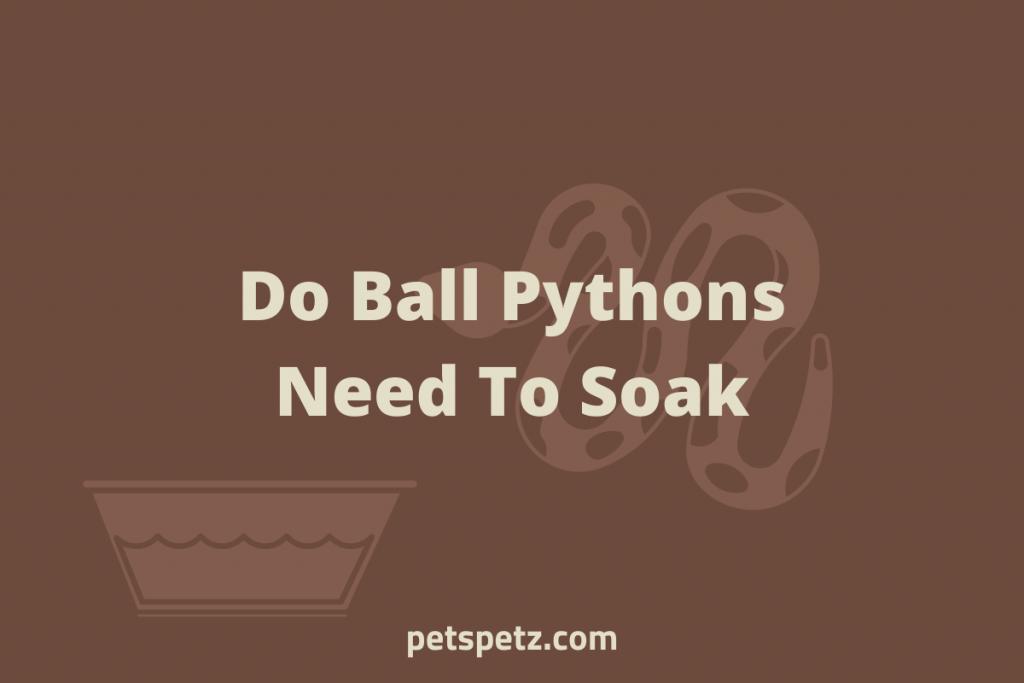 Do Ball Pythons Need To Soak