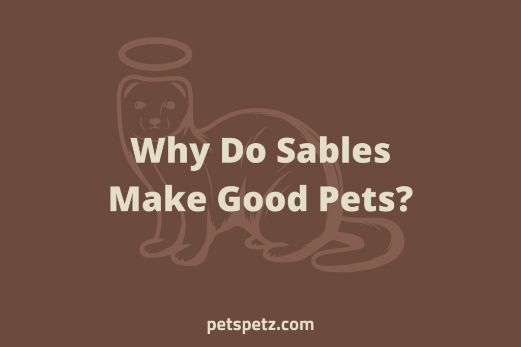 Do Sables Make Good Pets