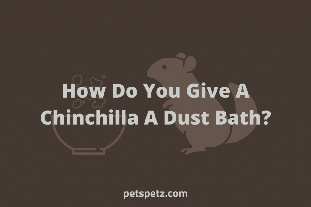 How Do You Give A Chinchilla A Dust Bath