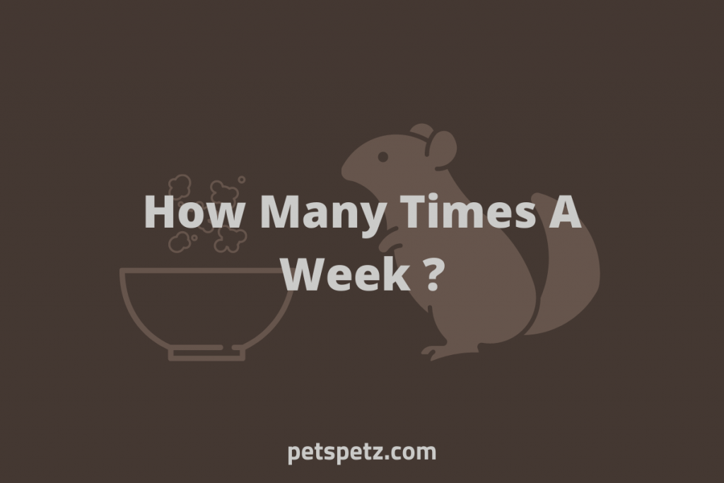 How Many Times A Week Should You Give Chinchillas A Dust Bath