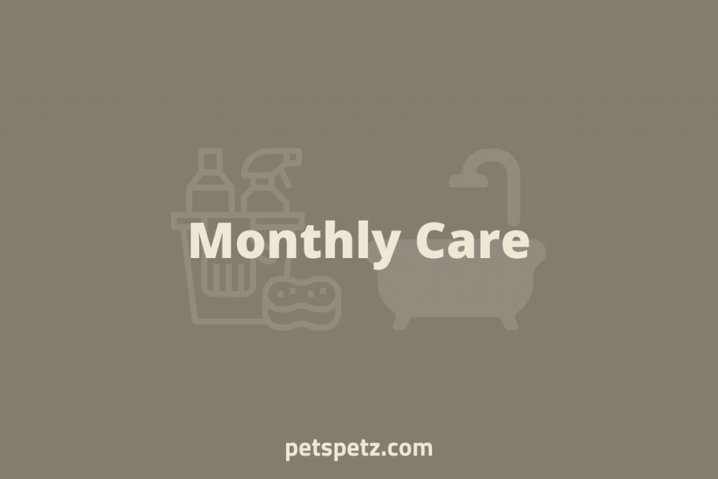 Monthly Bearded Dragon Care