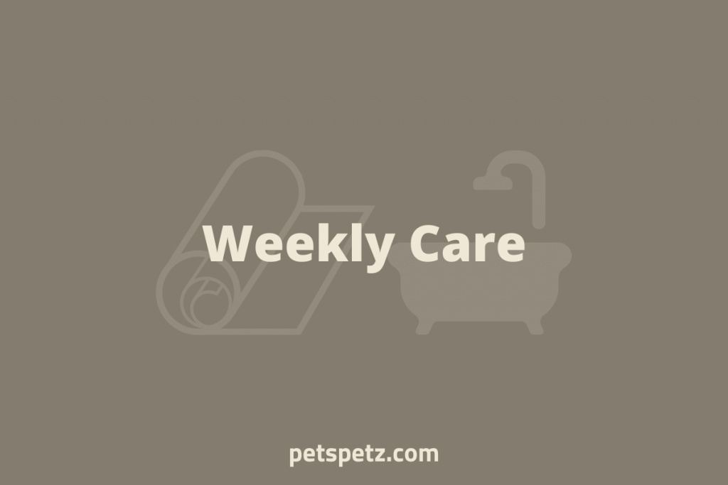 Weekly Bearded Dragon Care