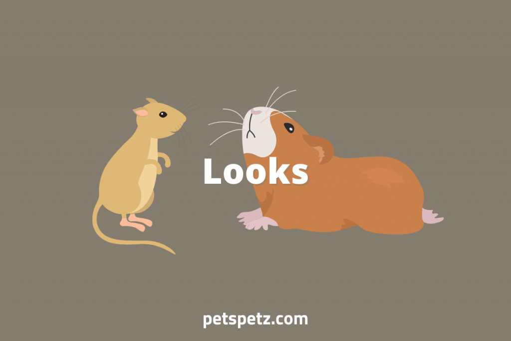 are gerbils or guinea pigs better pets