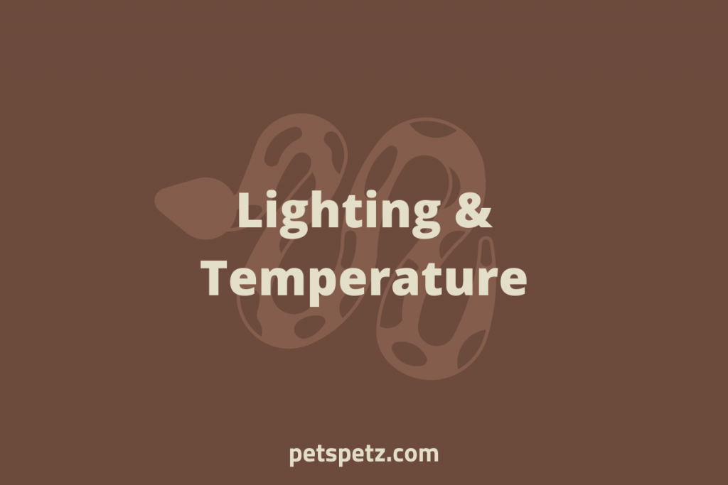 ball python care lighting and temperature
