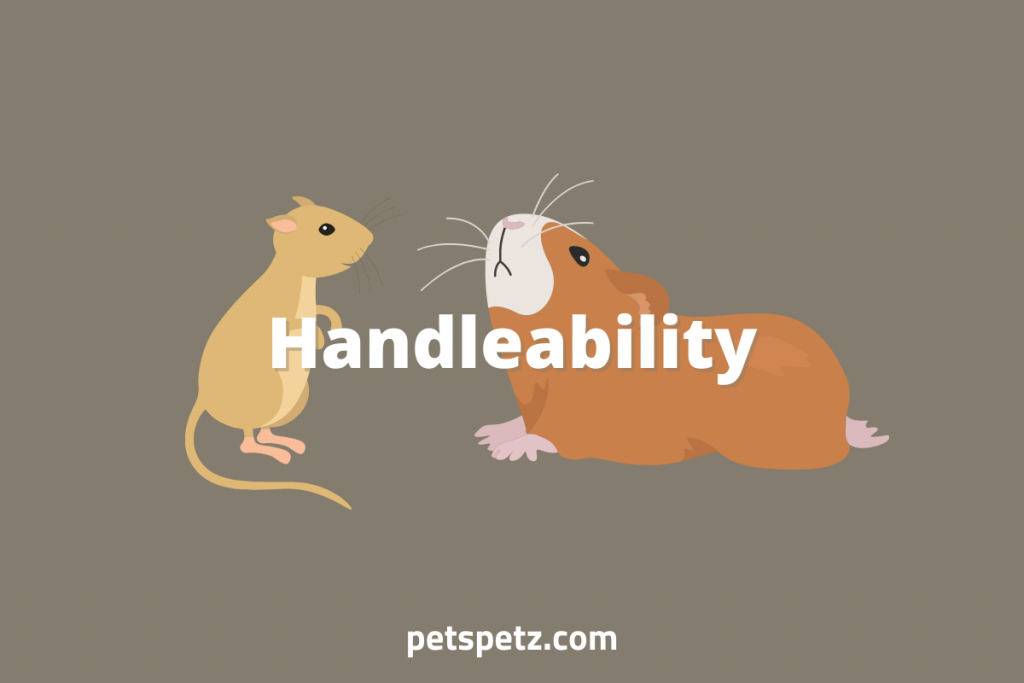 gerbils vs guinea pigs