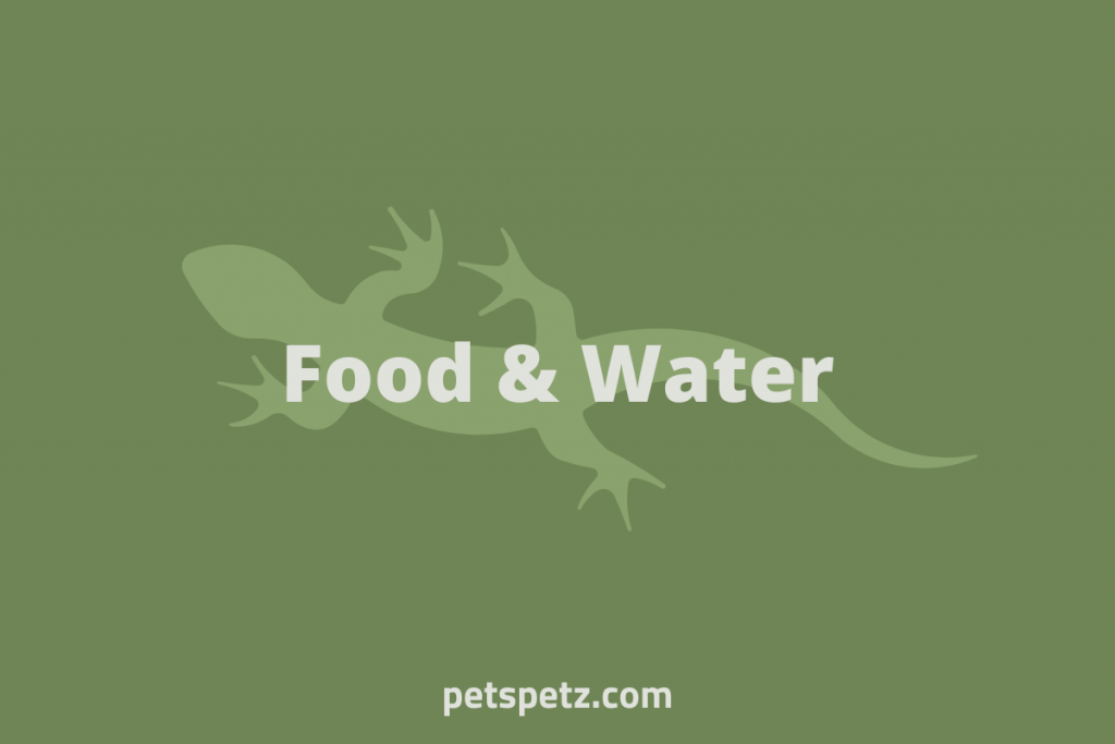 green anole food and water