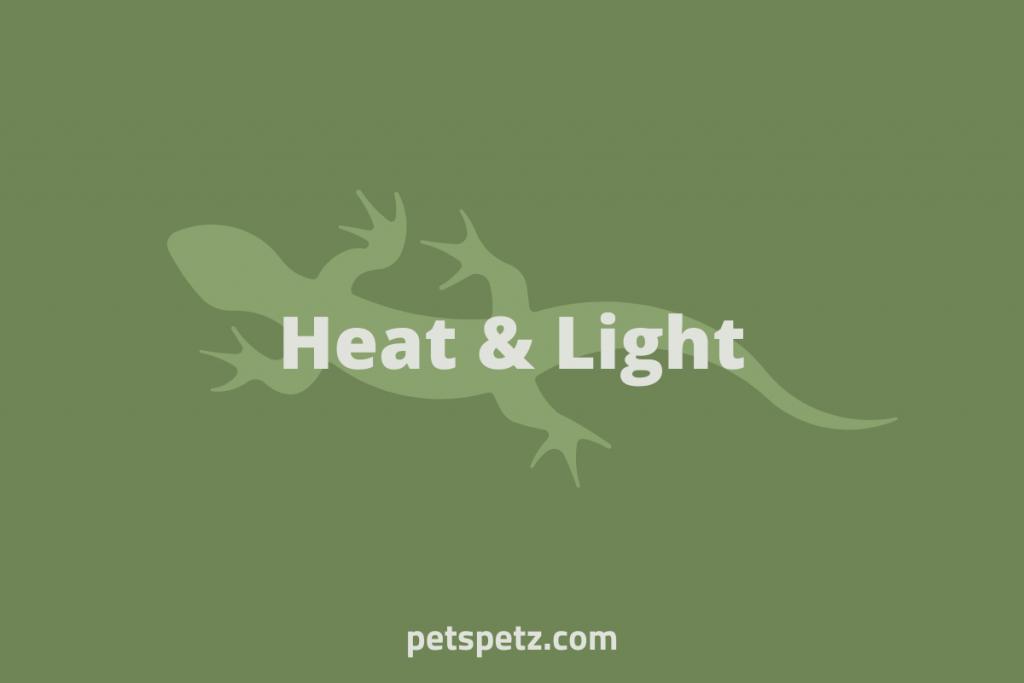 green anole heat lamp