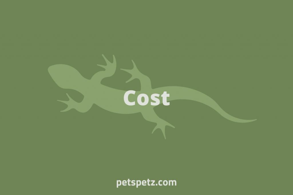 green anole lizard cost