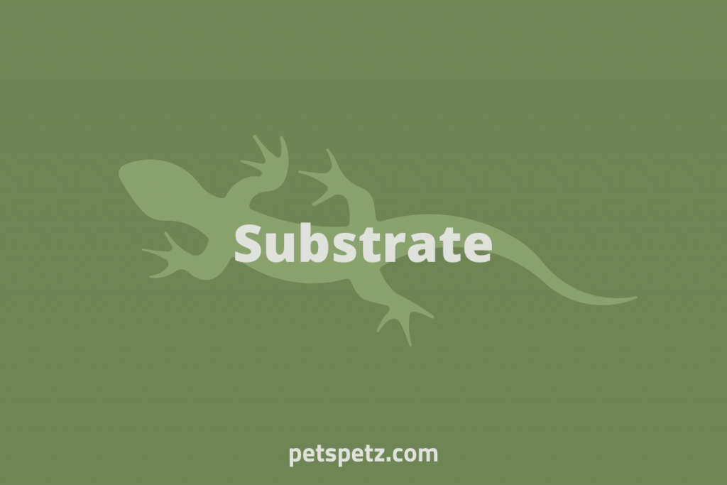 green anole substrate