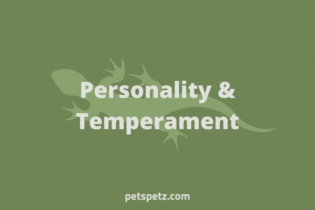 green anole temperament